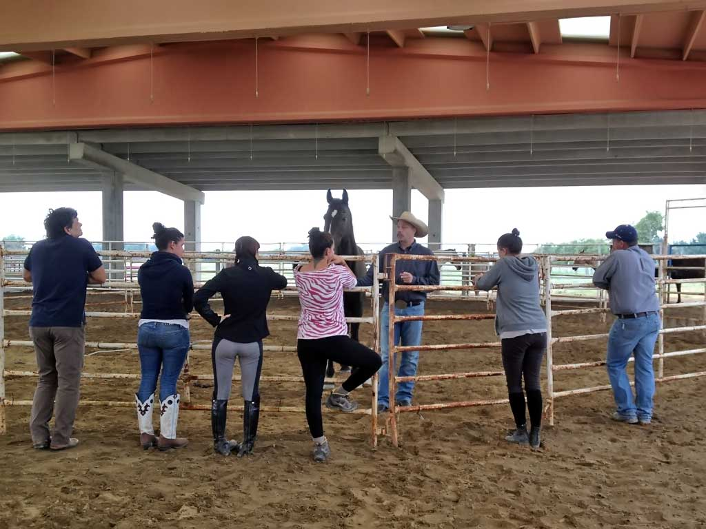 Private class on equine behaviour