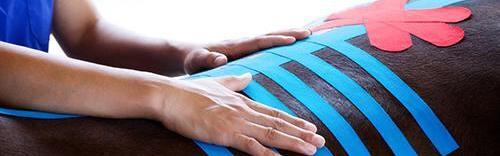 Rehabilitation therapies for horses - Animantia