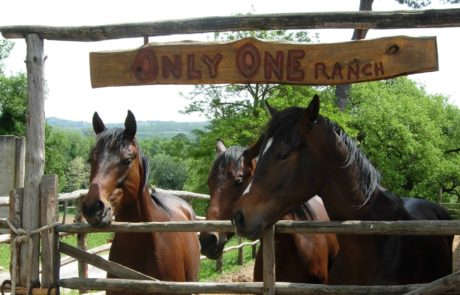 Only One Ranch