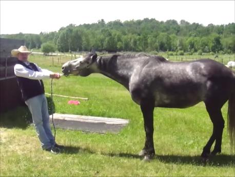 Jason Buckingham re-training a problem horse on pressures.