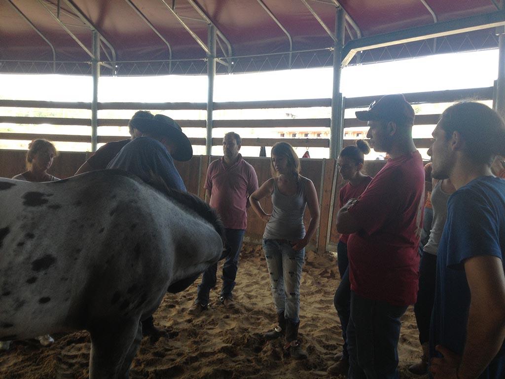 Equine welfare and behaviour class - Animantia