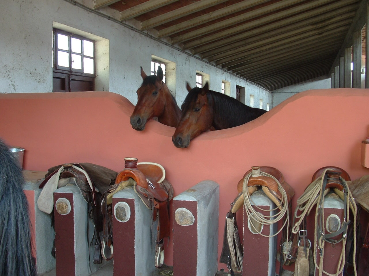 Only One Ranch - Ethological facility in Tuscany - Animantia