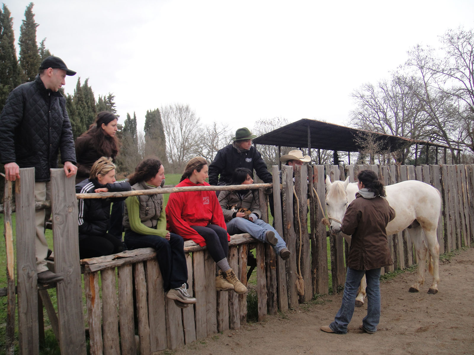 Private teaching on horse behavior - Animantia