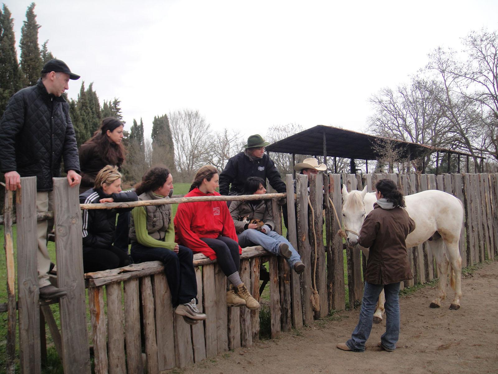 Classe privata sul comportamento equino - Animantia