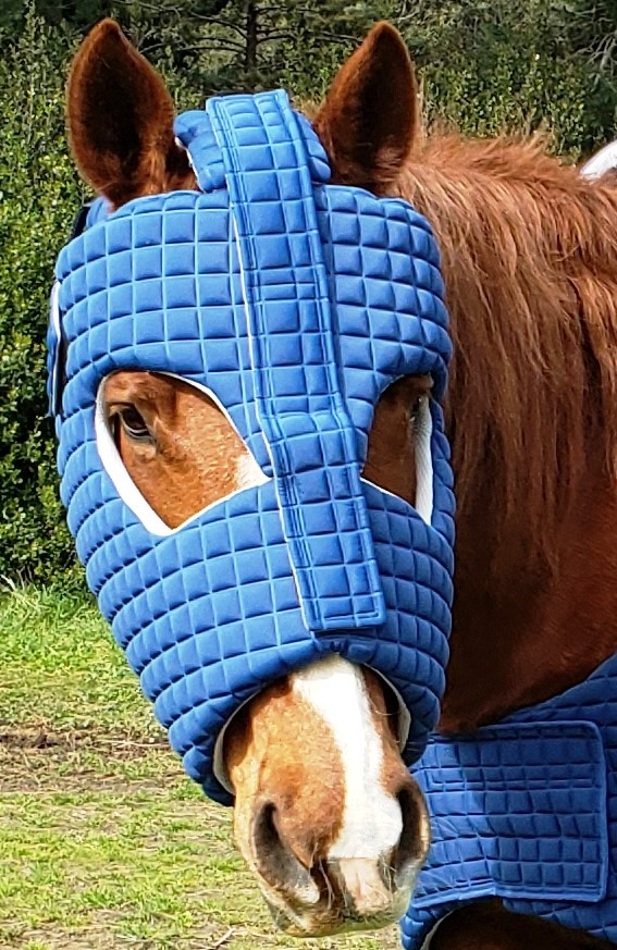 Equine Armour - Iron Horse