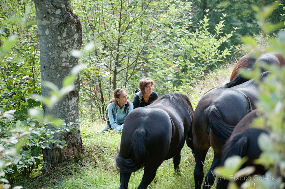 Wild Horse Watching Italy