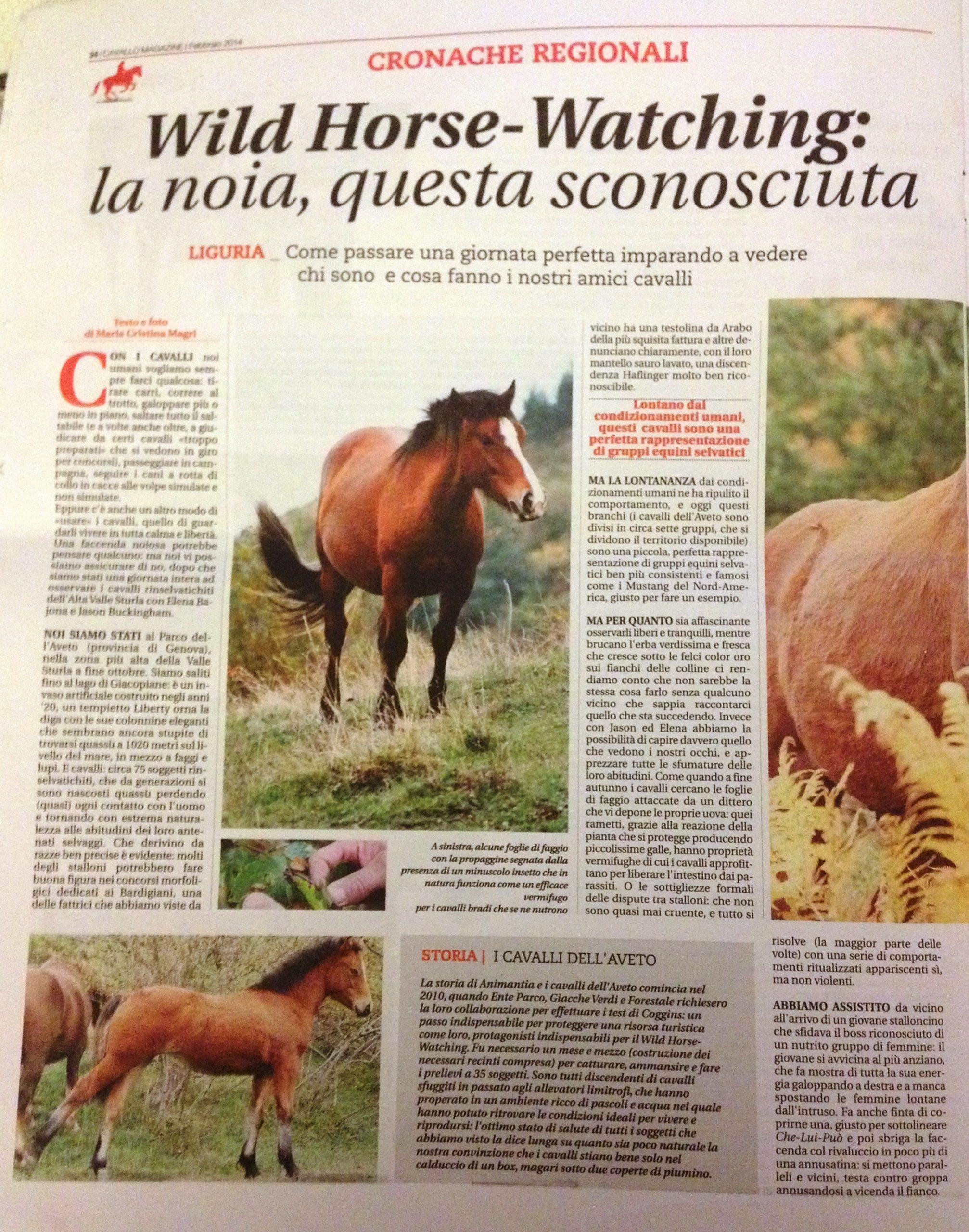 Articolo Cavallo Magazine Febbraio 2014
