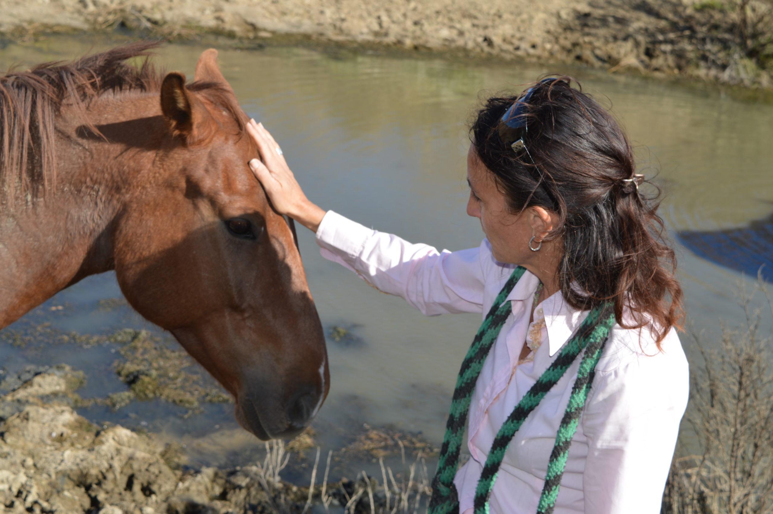 Equine Applies behavior in Colorado - Animantia