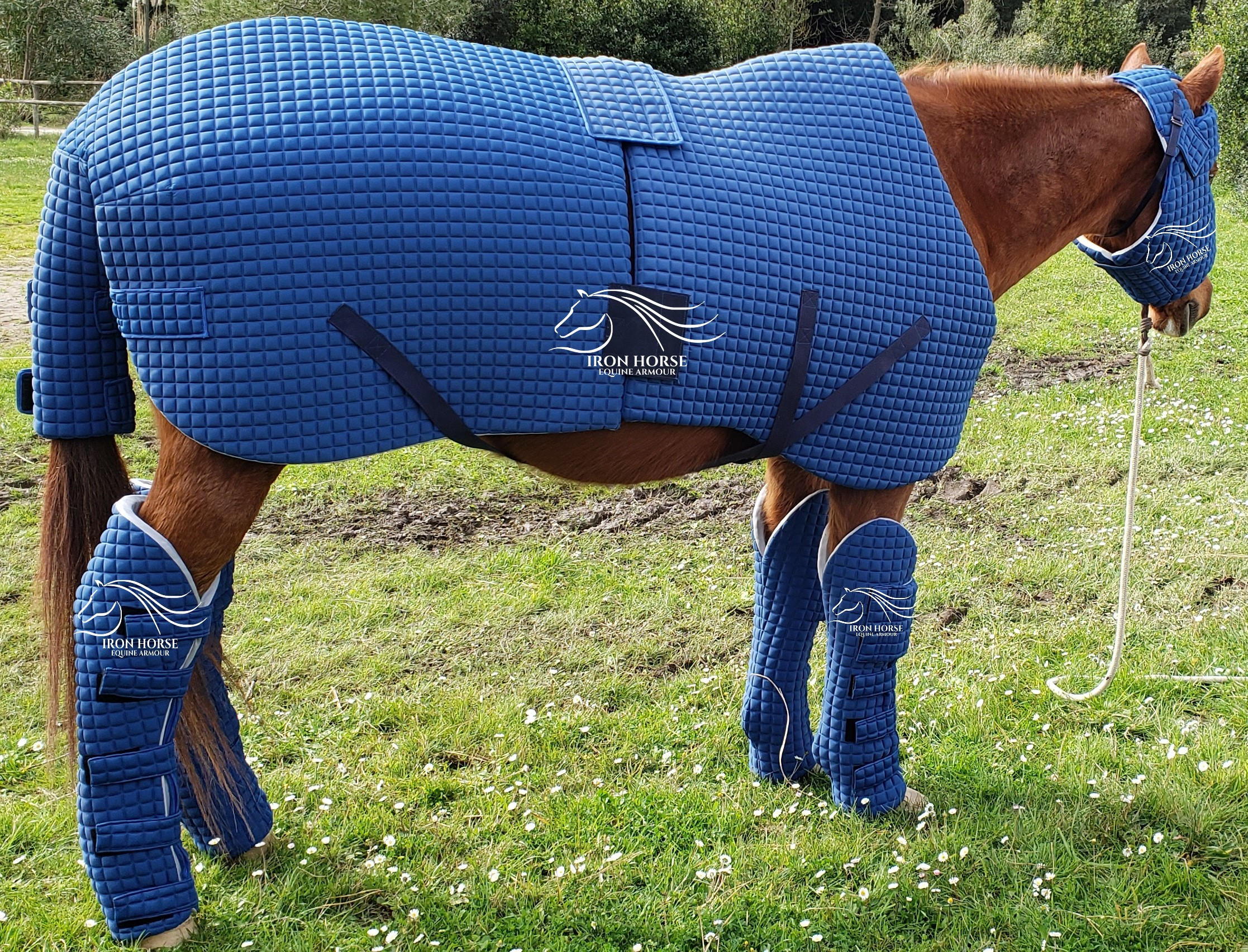 Equine armour - horse protection